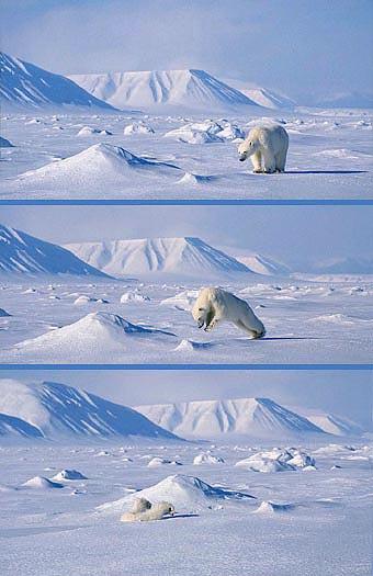 polarbear8.jpg