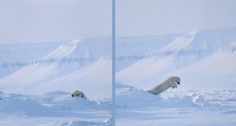 polarbear92a.jpg