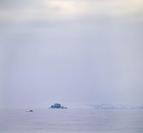 polarbear94.jpg