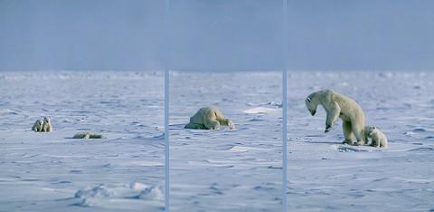 polarbear97a.jpg