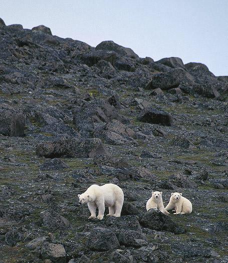 polarbear98.jpg