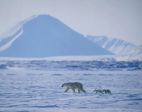 polarbear997.jpg