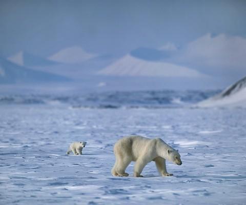 polarbear998.jpg