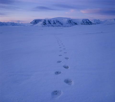polarbear998b.jpg