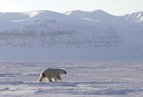 polarbear998p.jpg