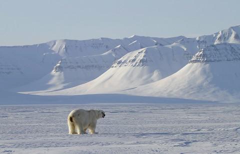 polarbear998s.jpg