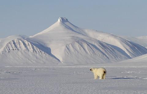 polarbear998v.jpg