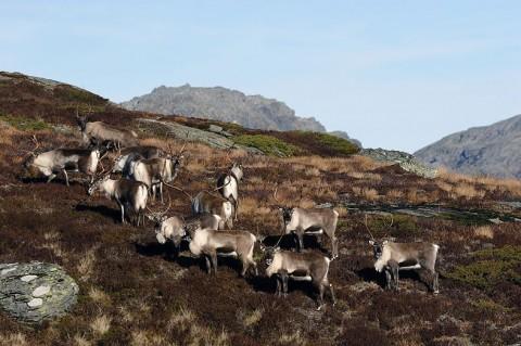 reindeer6.jpg