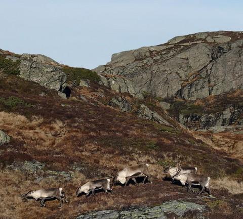 reindeer7.jpg