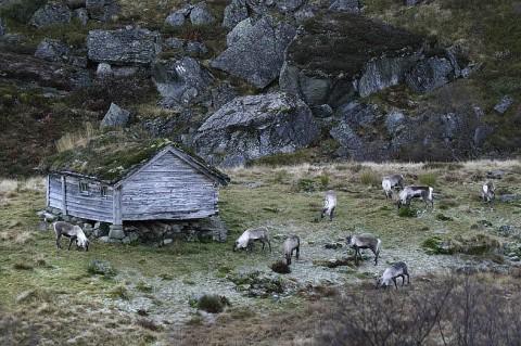 reindeer93.jpg