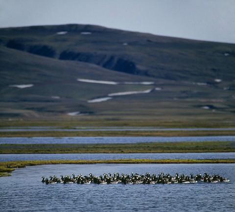 geese22.jpg