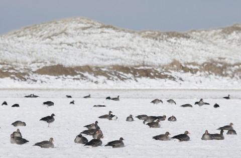 geese29.jpg