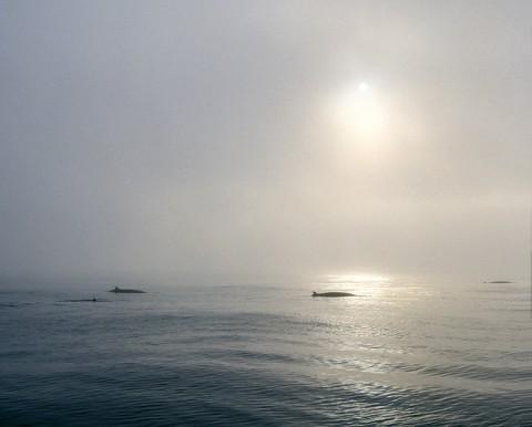whales21.jpg