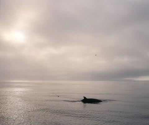 whales22.jpg