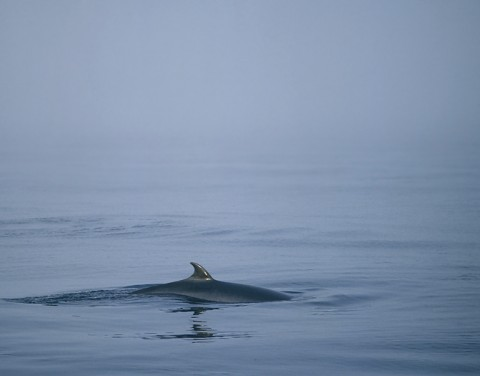 whales23.jpg