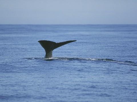 whales25.jpg