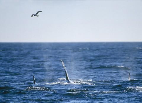 whales27.jpg