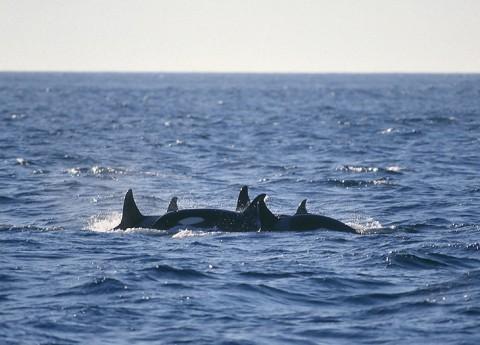 whales29.jpg