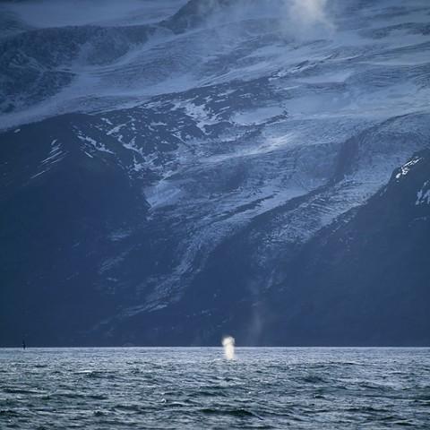 whales30.jpg