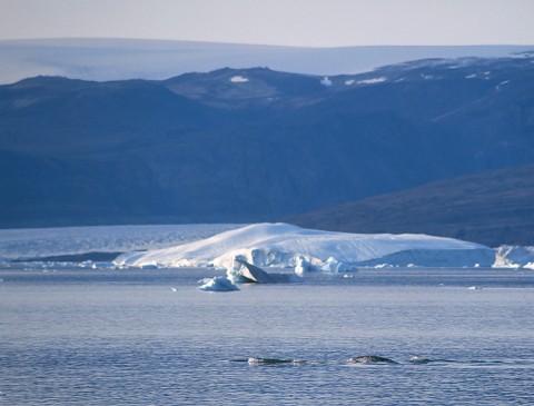 whales31.jpg