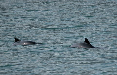 whales32.jpg