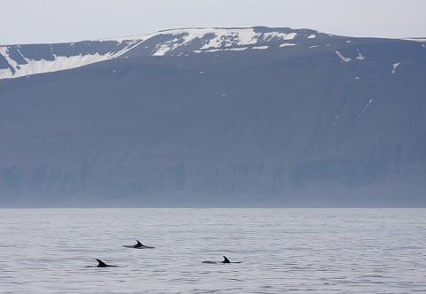 whales34.jpg