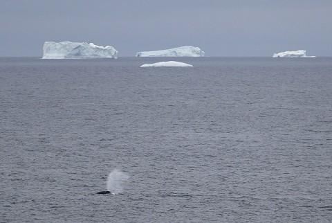 whales36.jpg