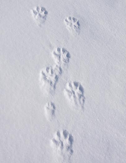 tundrawolf04.jpg
