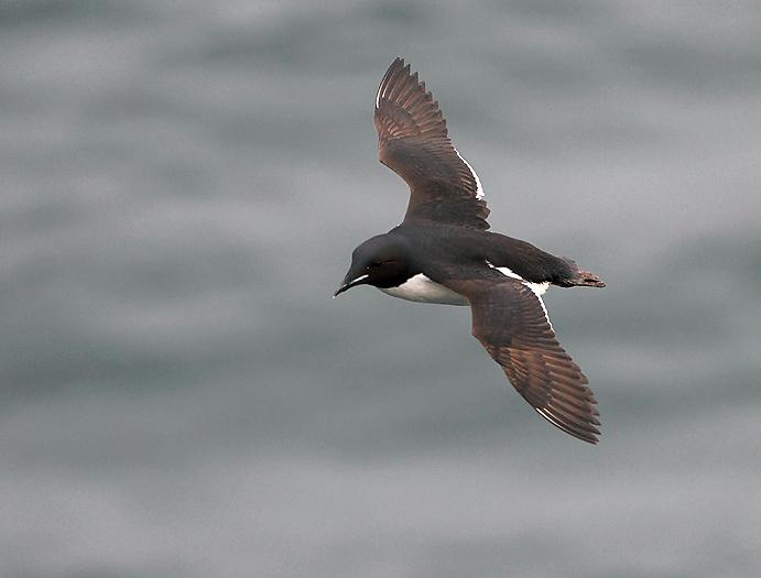 seabirds65.JPG