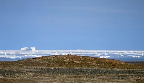 arcticfox6.jpg