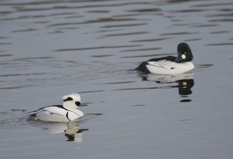 ducks27.jpg