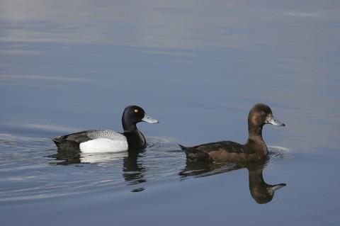 ducks32.jpg