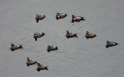 ducks40.jpg