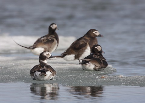 ducks45.jpg