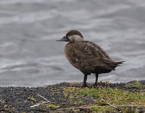 ducks47.jpg