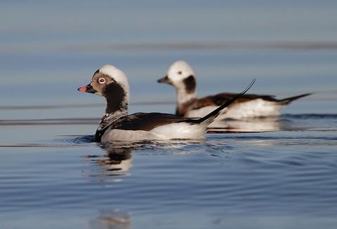 ducks53.jpg