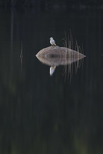 fiskemake11.jpg