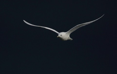 gull32.jpg