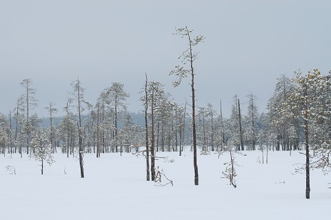 landscape86.jpg