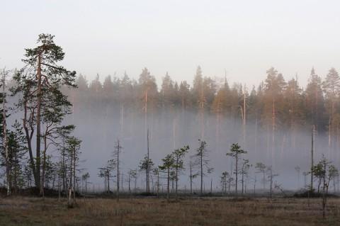 landscape87.jpg