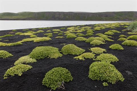 Part of a sub-arctic lava beach, north Iceland