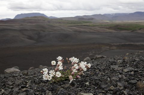 From Hverfjall vulcano against the Ludent vulcano, north Iceland