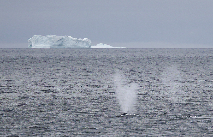 whales37.jpg