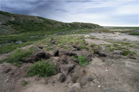 tundrawolfden_barrenlands2.jpg