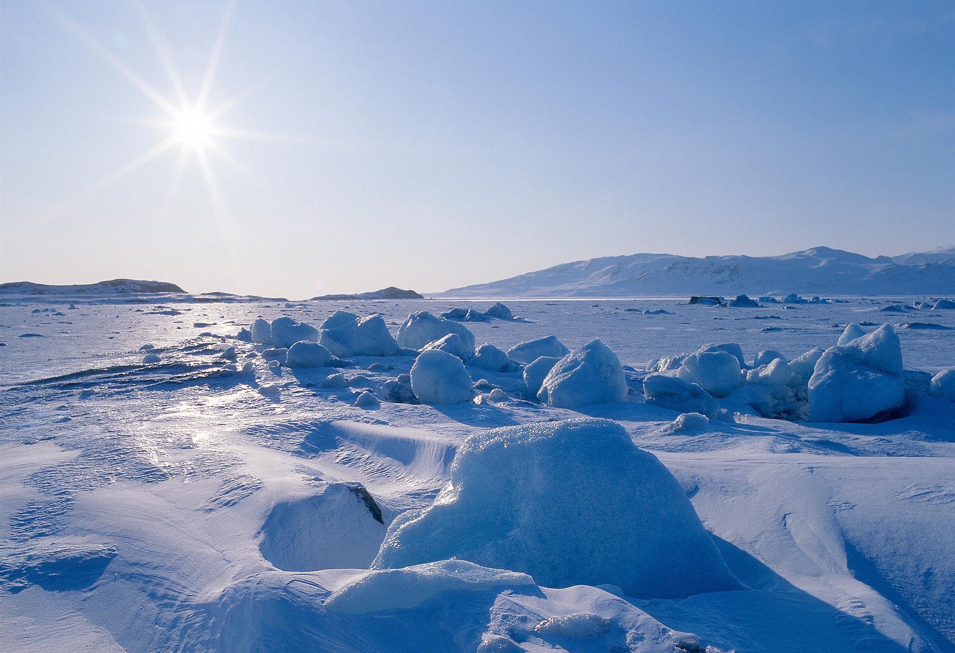 картины арктики фото ценность
